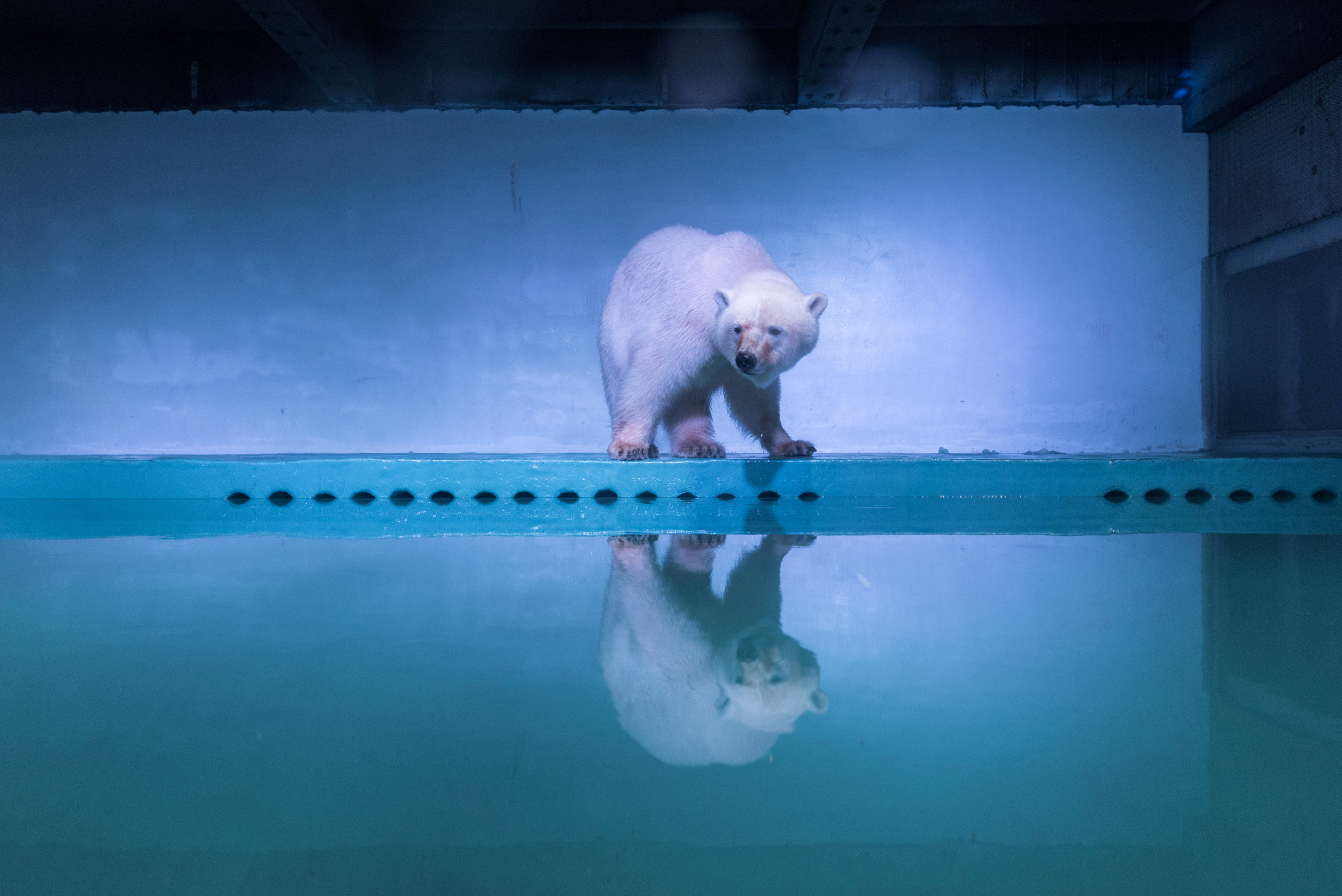 Rights groups urge permanent move from China mall for 'saddest' polar bear