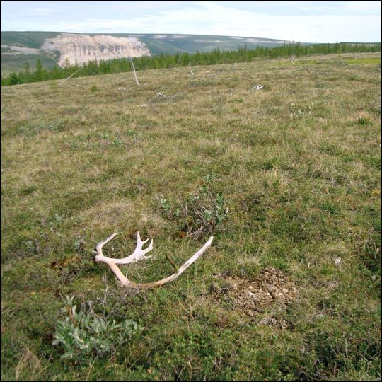 Starvation killed 80,000 Russian reindeer after unusual rains cut off food supply