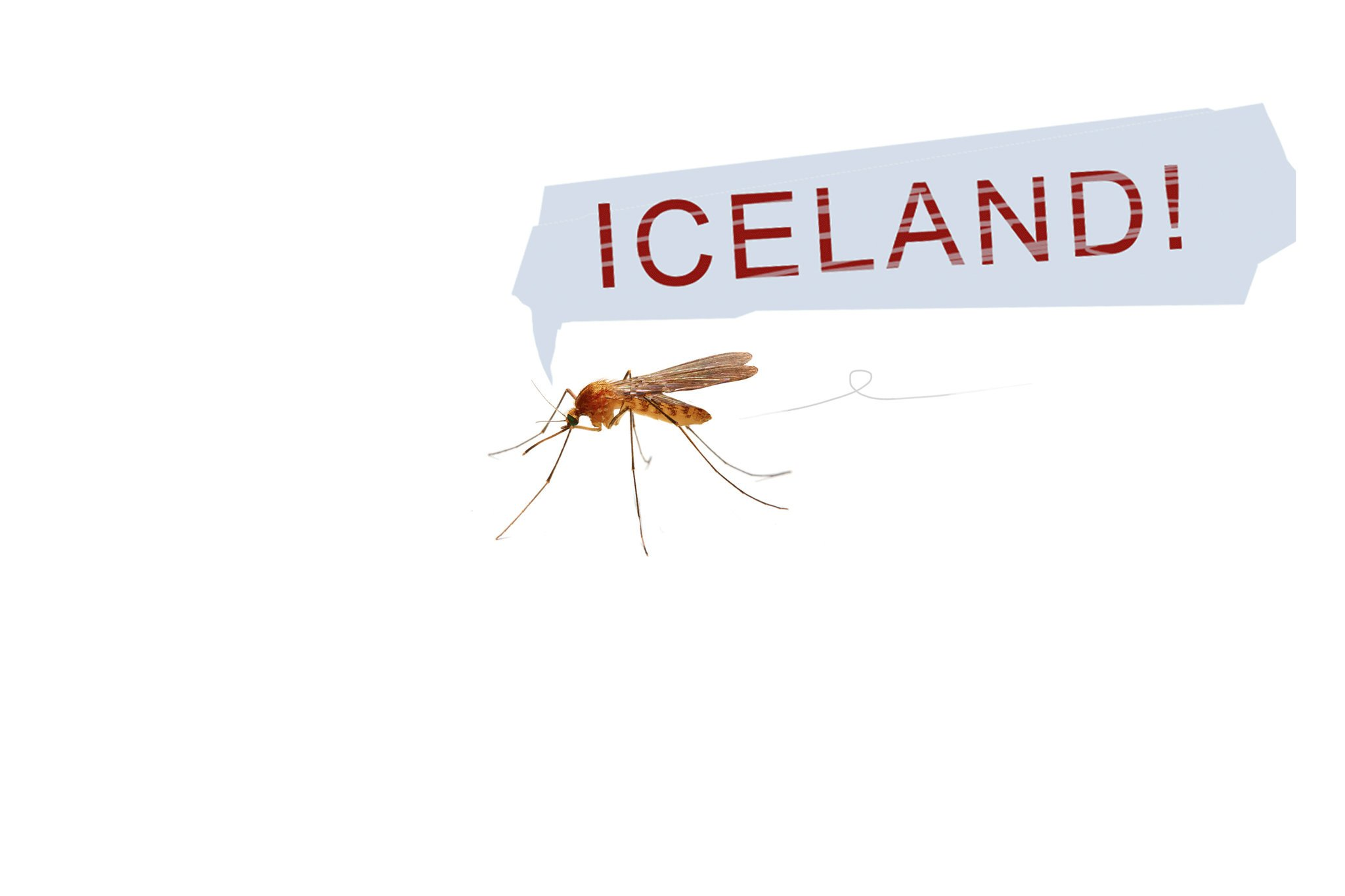 Iceland is mysteriously free of mosquitoes—for now, anyway