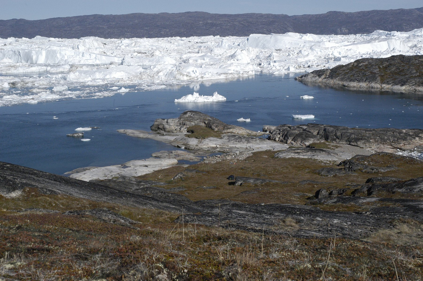 DNA study casts fresh light on the diet of earliest Greenlanders