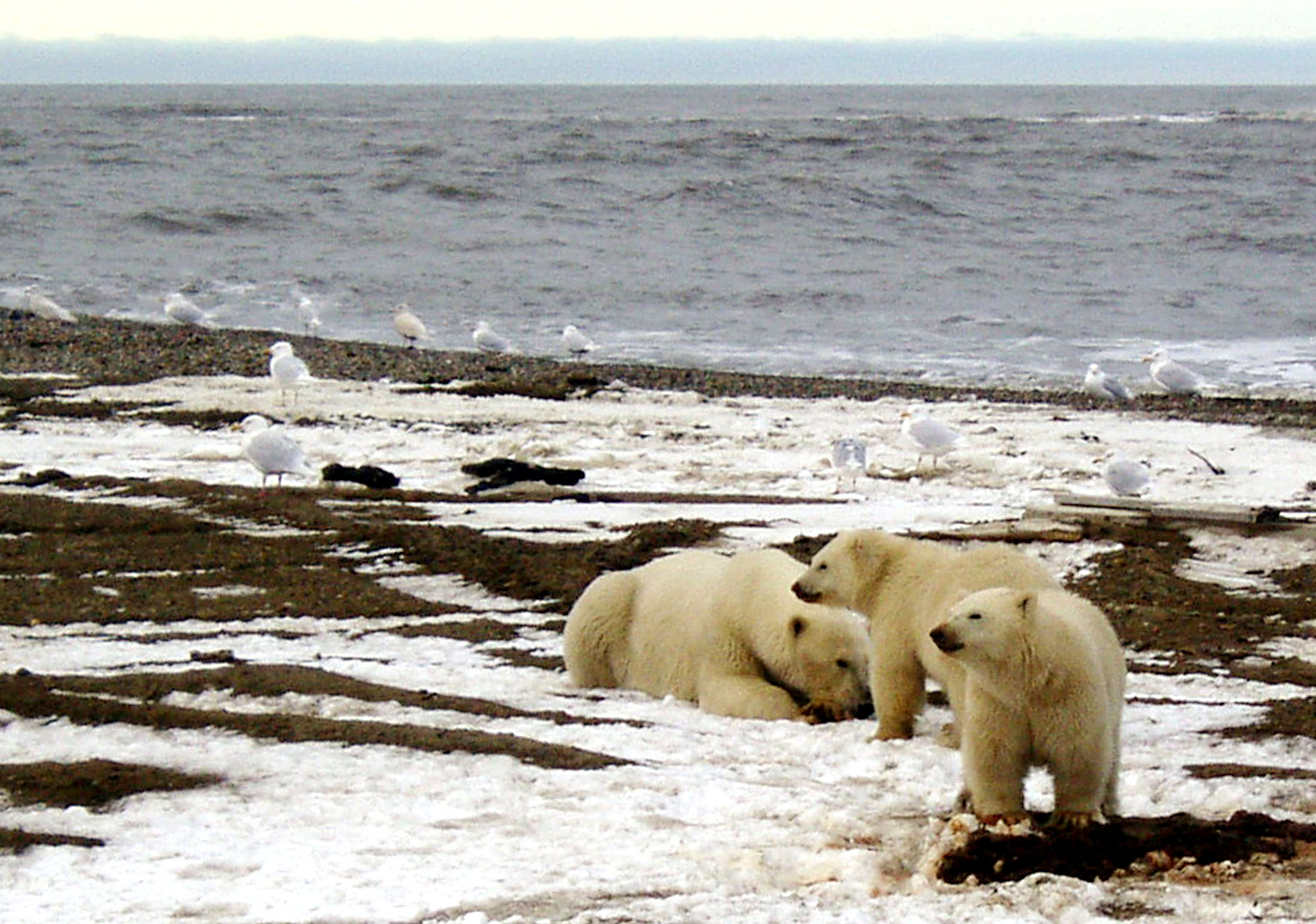 With US government shutdown over, a path is cleared for hearings on Arctic oil development