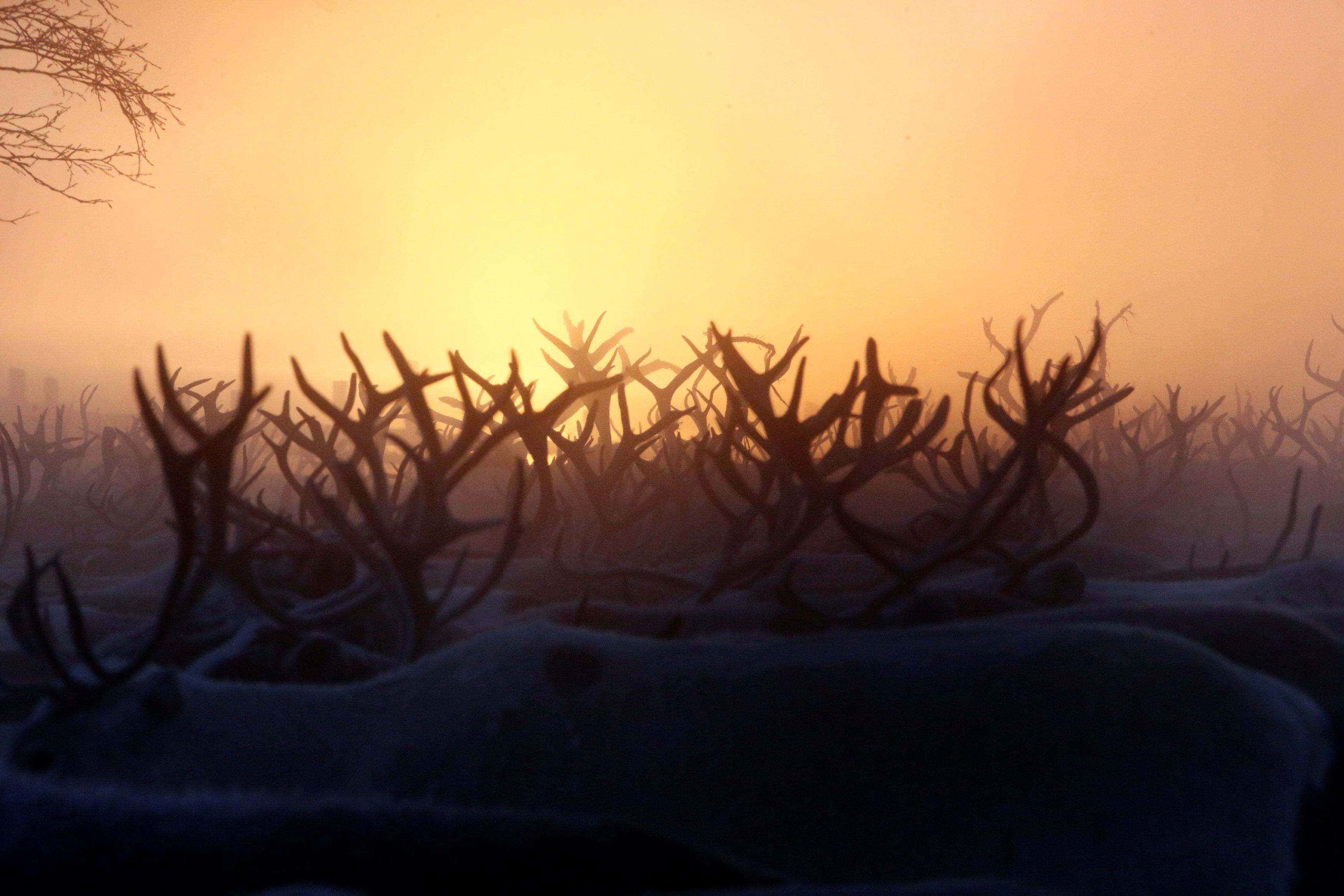 Photos: Reindeer herding in Russia's remote Arctic