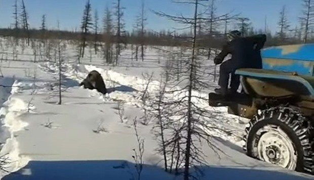 'Squash him!' Video of gruesome bear-killing in Russia goes viral — and could be a crime