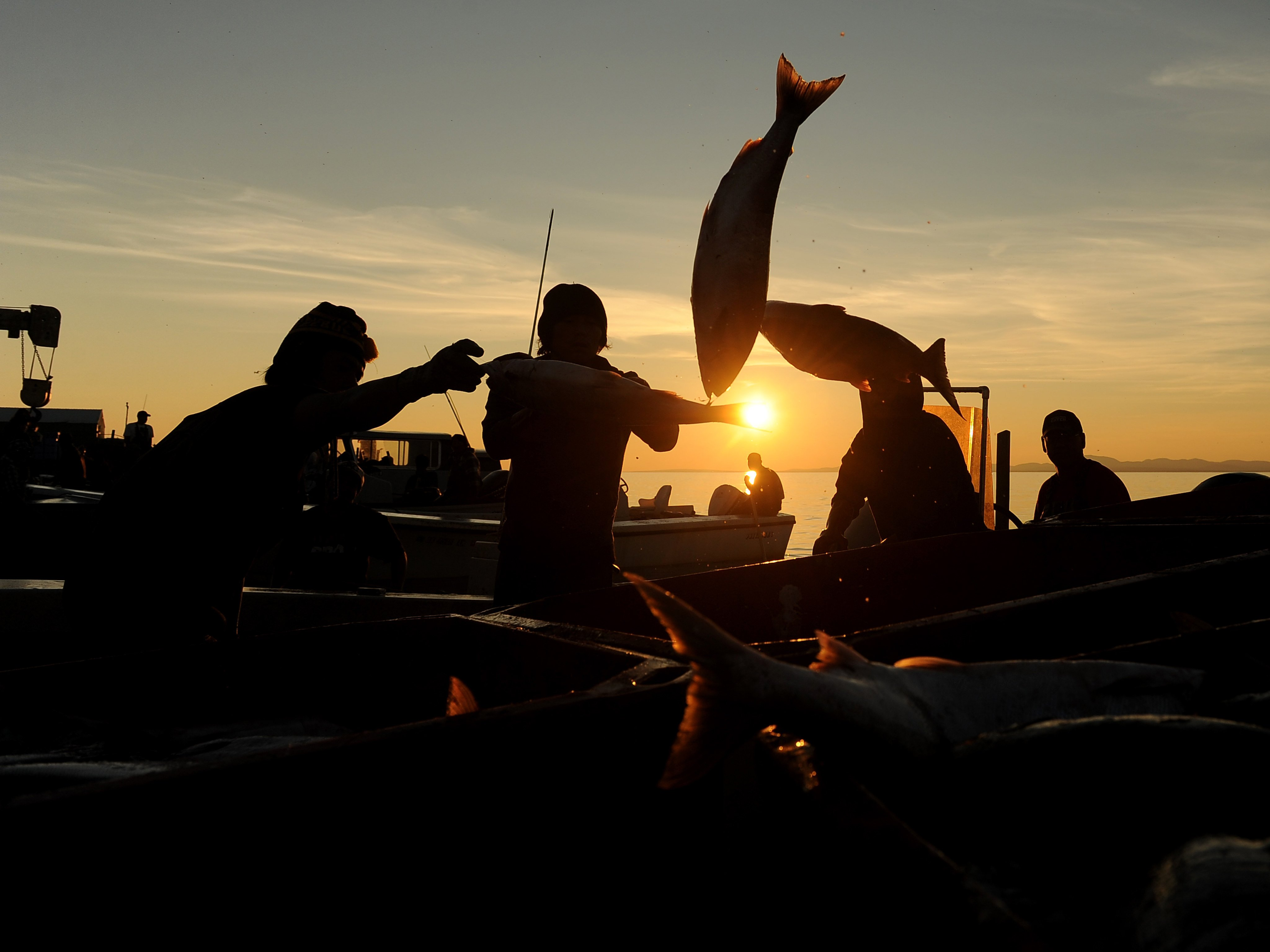 No agreement on Arctic fisheries moratorium