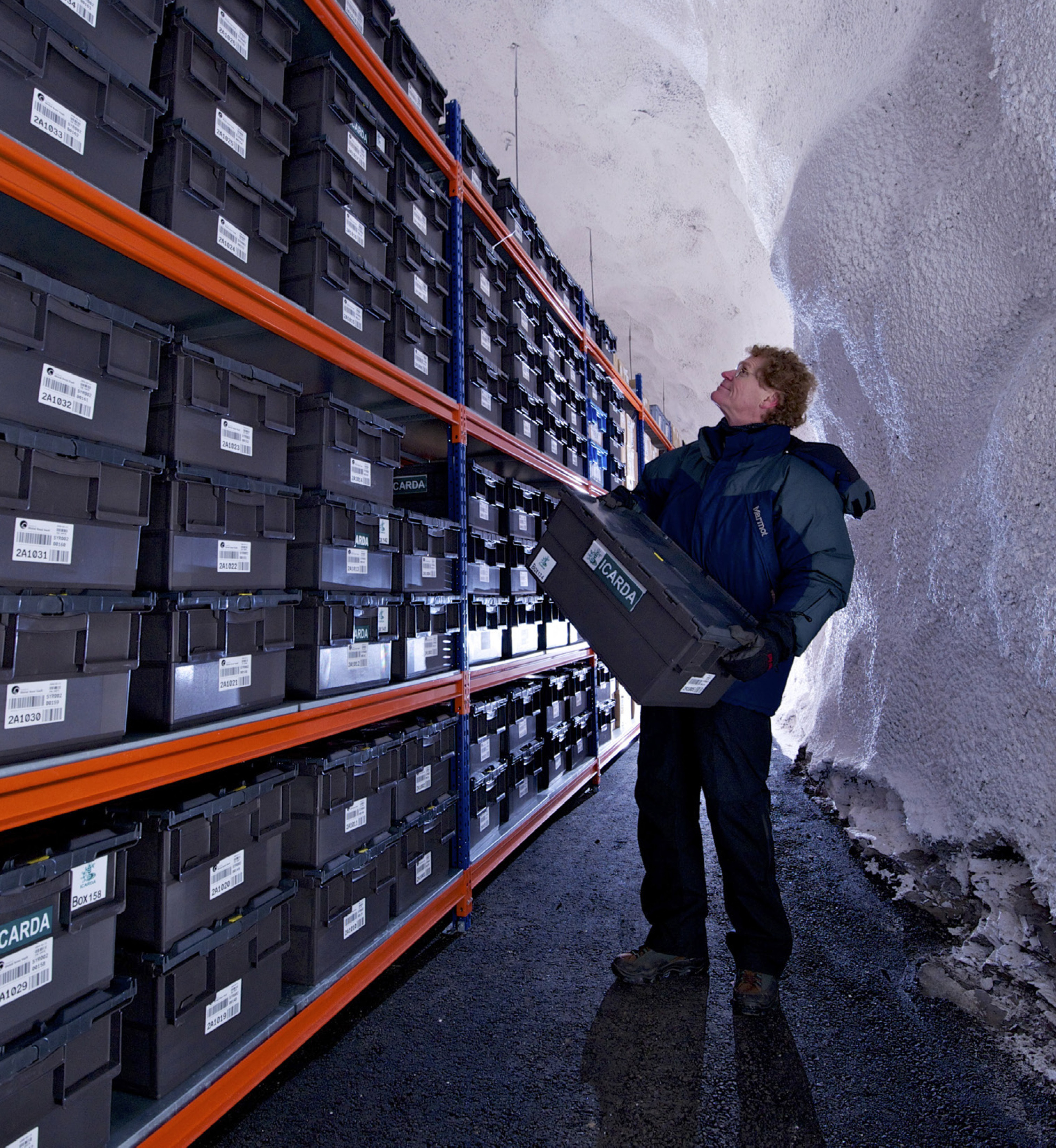 Cary Fowler in the main seed vault. Its natural year-round temperature is minus-5 degrees Celsius (23 degrees Fahrenheit), but the air is further cooled to the optimum storage temperature of minus-18 degrees Celsius (zero degrees F). (Jim Richardson / Prospecta Press)