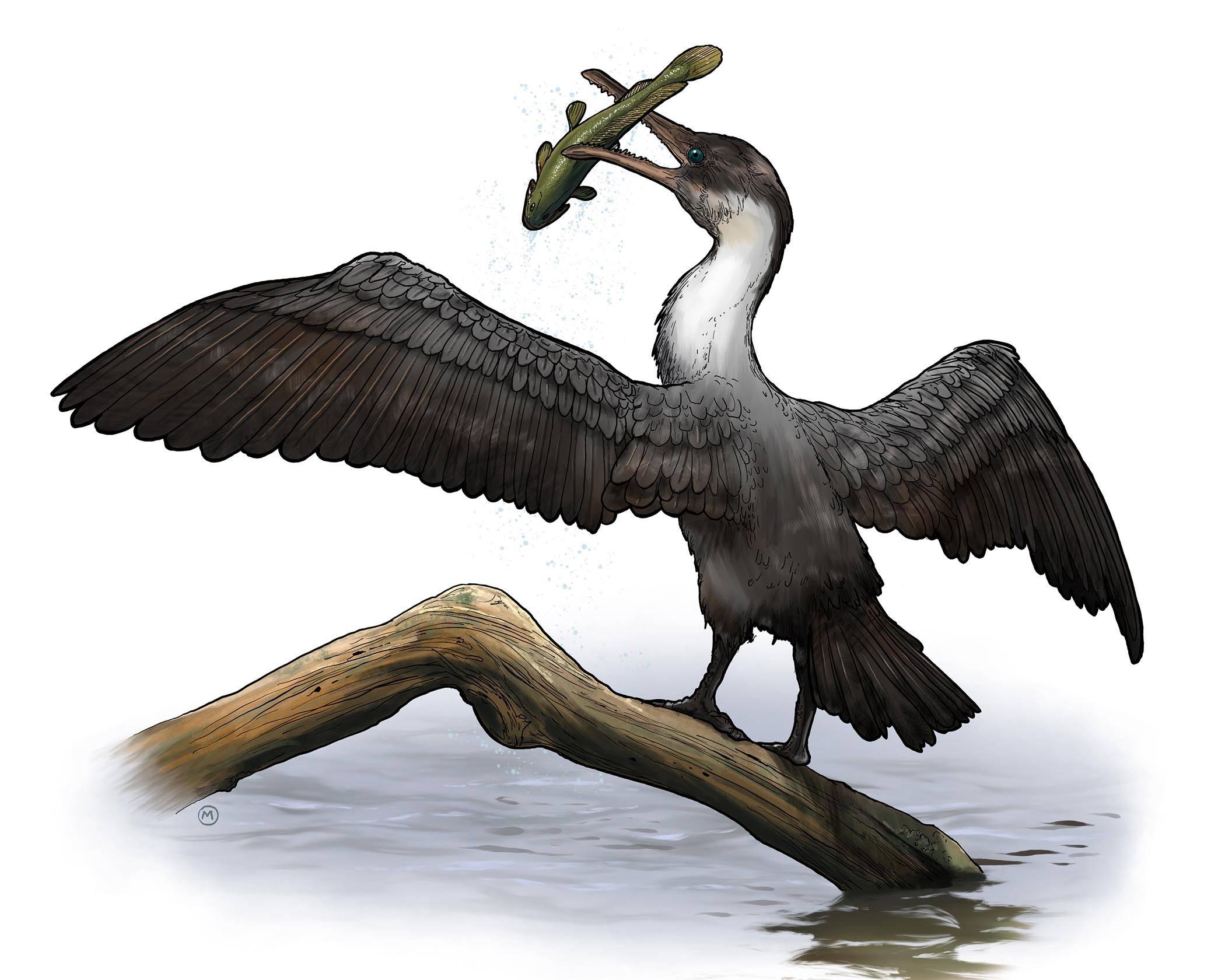 Newly discovered prehistoric bird lived near a balmy North Pole