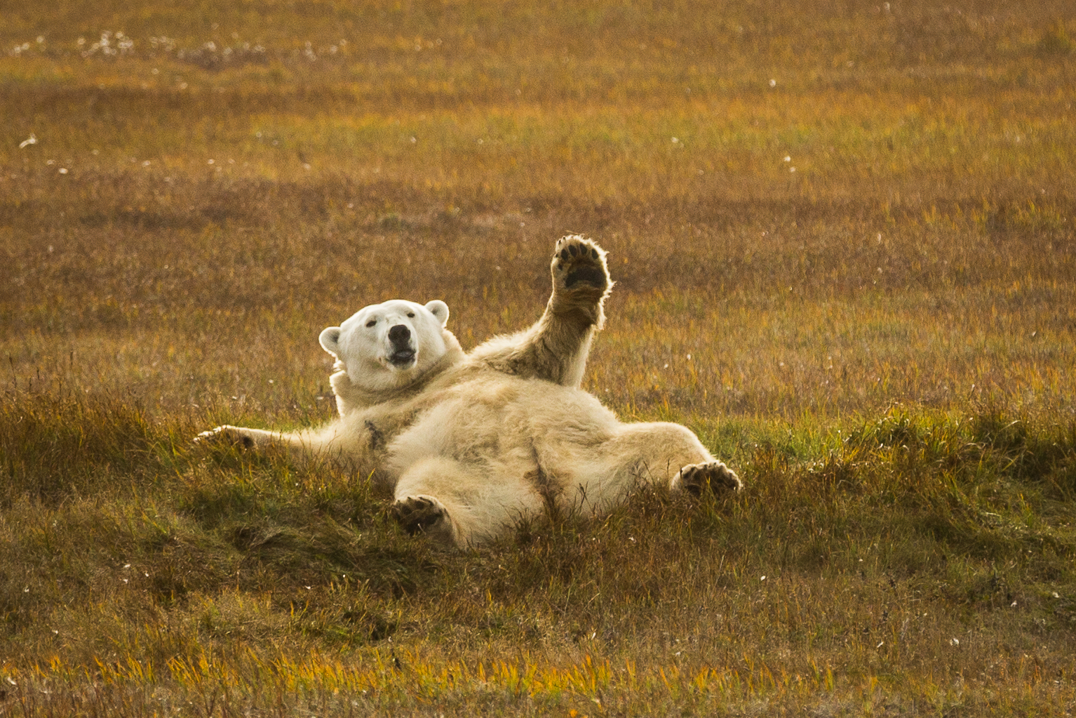 Help us make Arctic Now better by taking our reader survey
