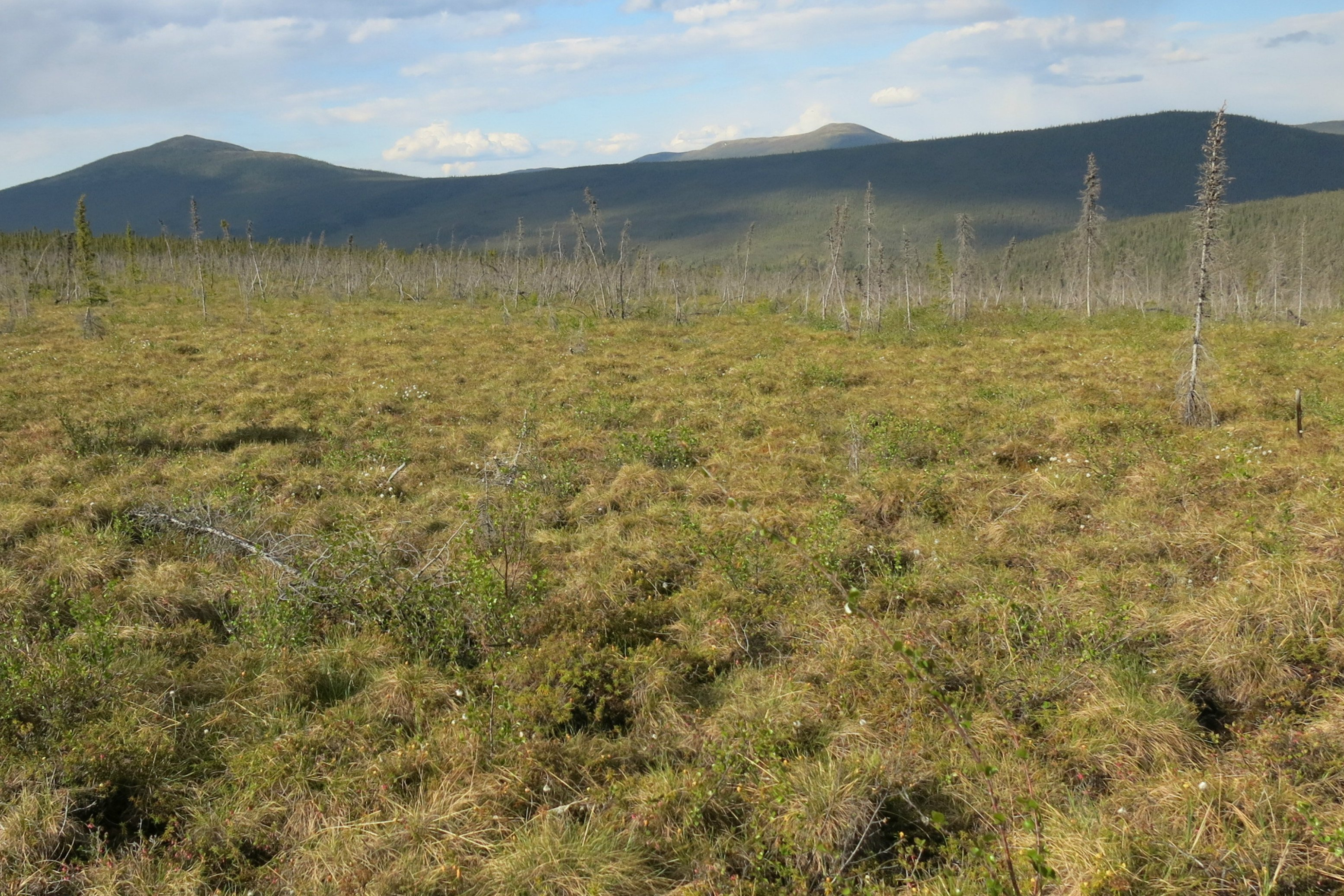 Arctic soils are set to release a lot of carbon—probably more than the region's plants can absorb