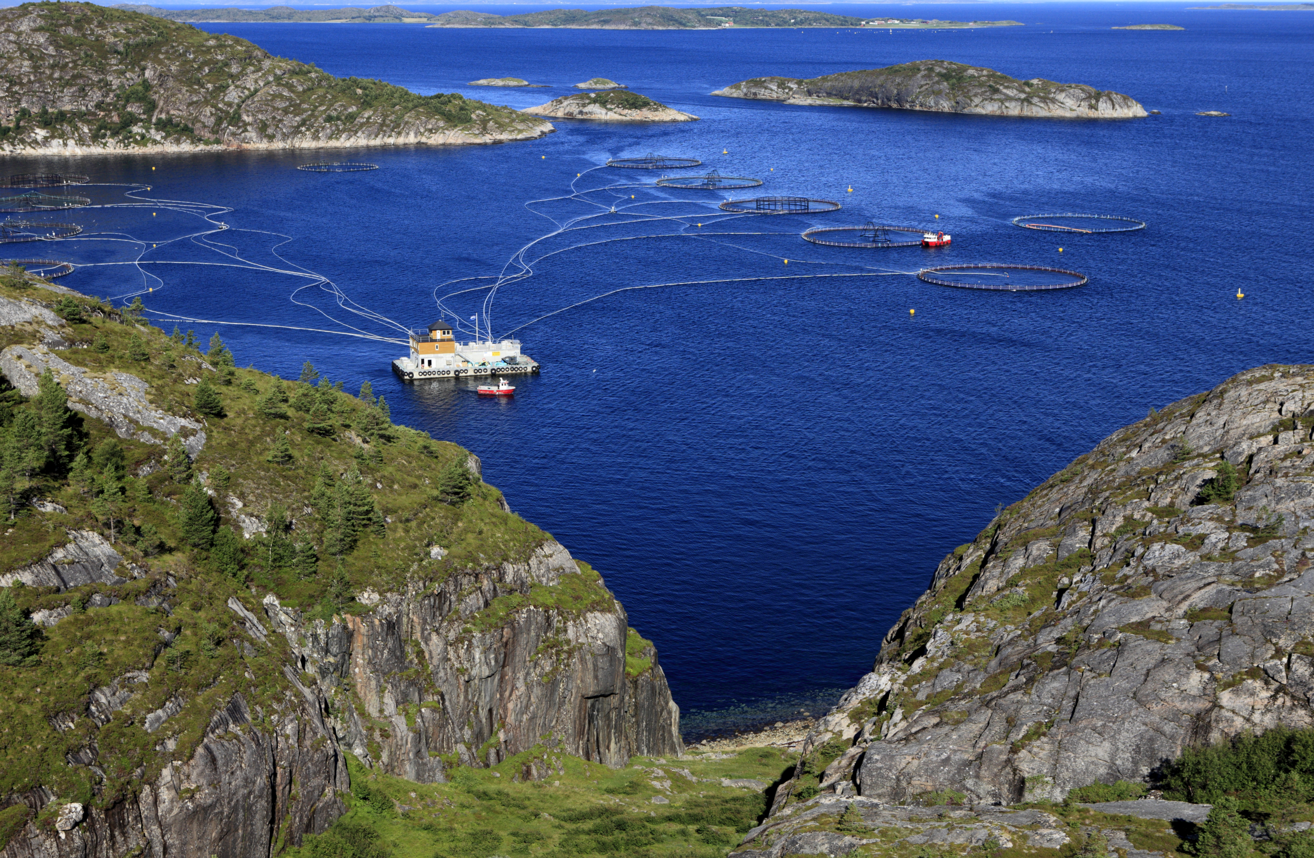 Norway signs deal to help resume salmon exports to China