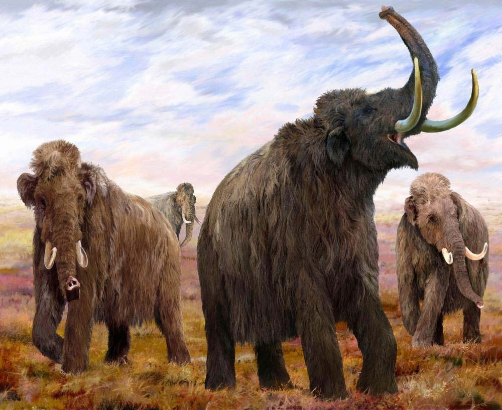 The mammoth's last stand: How the Wrangel Island herd died off