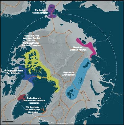 """Last Ice Areas"" of the polar North should be world heritage sites: IUCN"