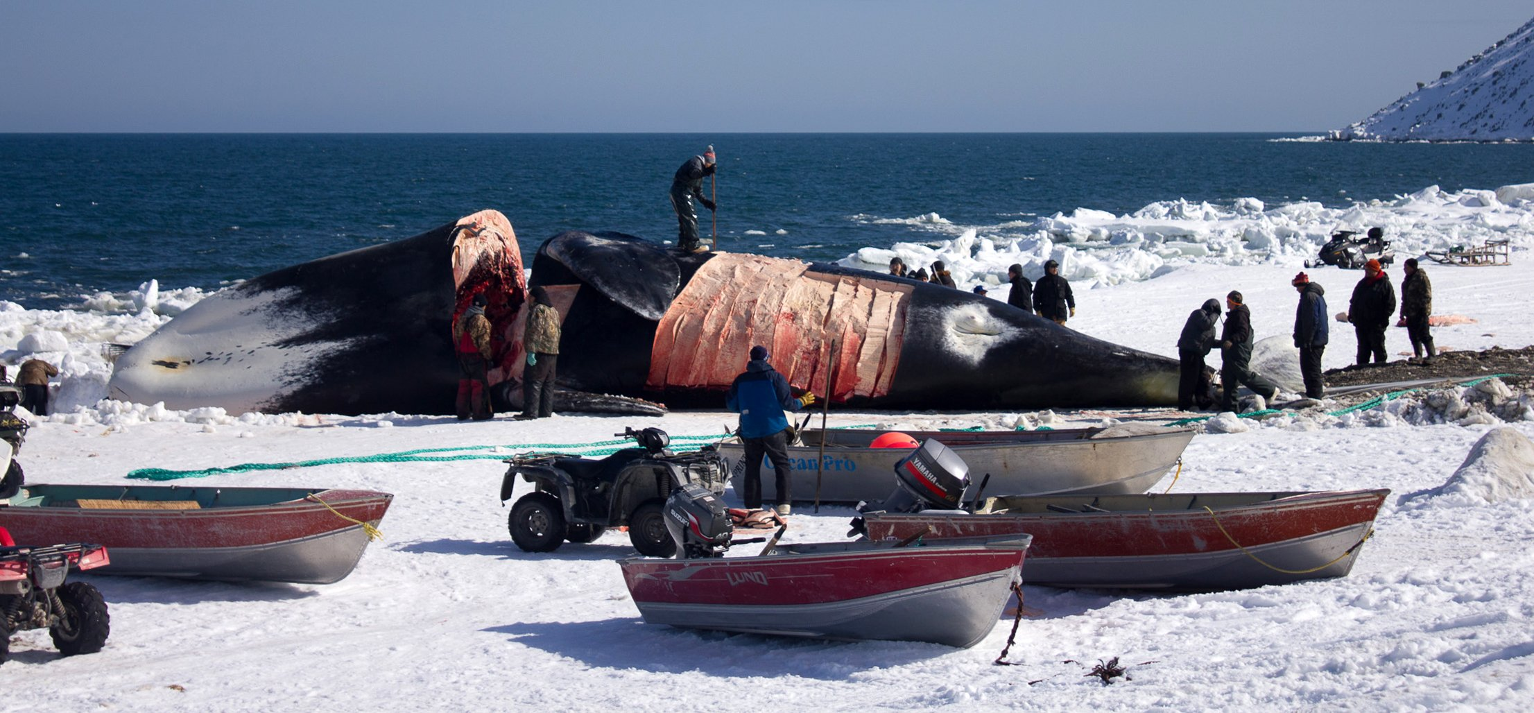 Sea Shepherd and others attacking Native whaling are allies of conquest