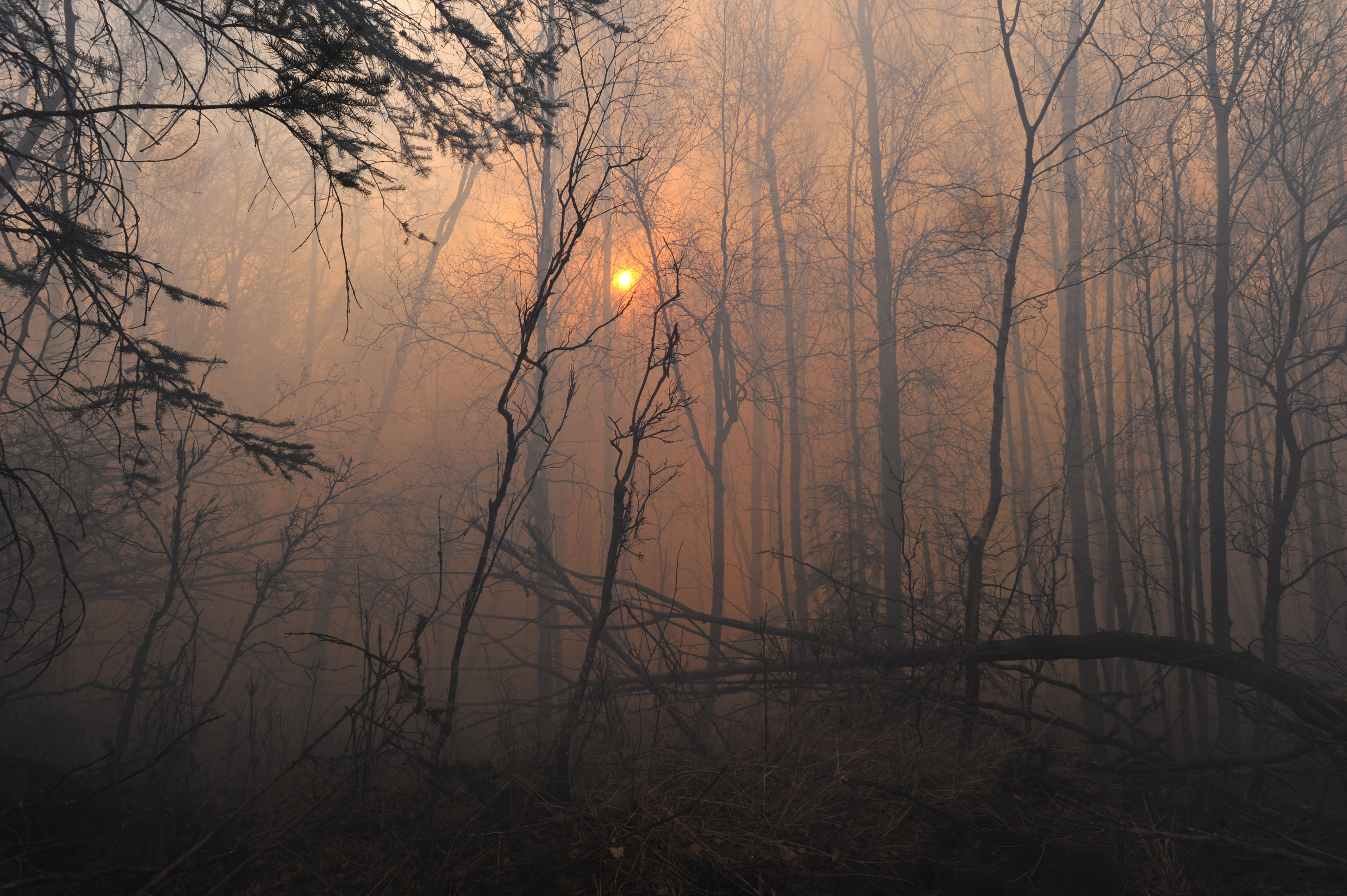 Firefighters from multiple agencies continued to battle the Moose Creek wildfire near Sutton in strong winds and cold temperatures on Sunday, Oct. 16, 2016. (Bill Roth / Alaska Dispatch News)