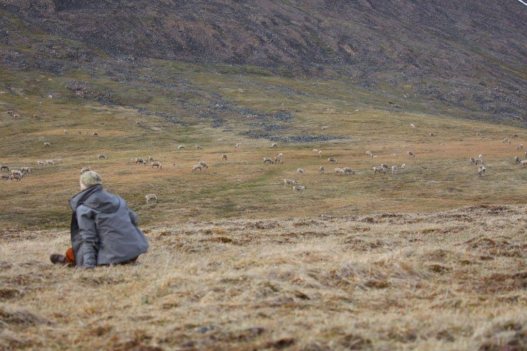 Seeing the Arctic through fresh eyes on a caribou-filled solstice in Alaska's Brooks Range