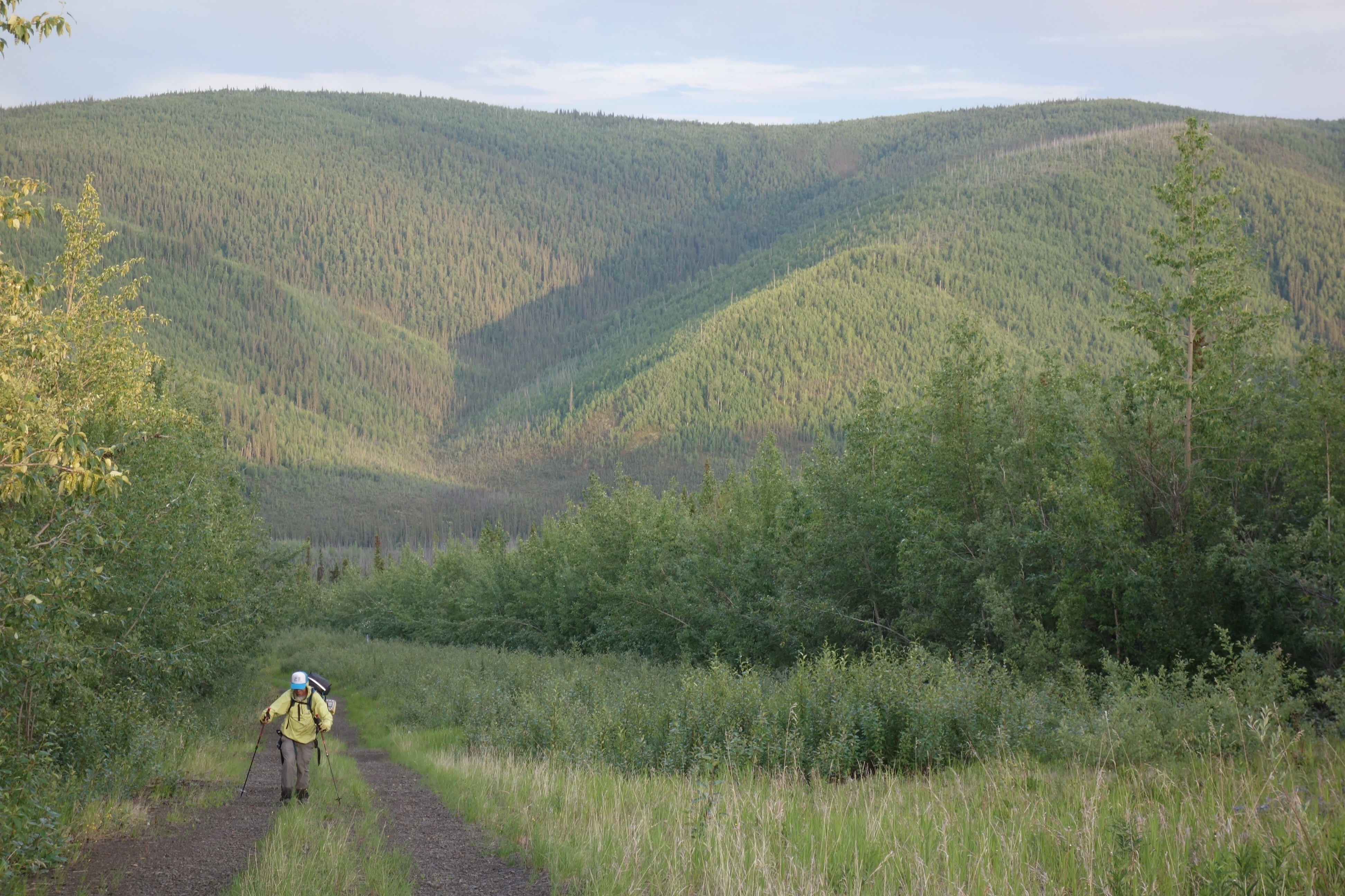 Andy Sterns ascends Isom Creek along the path of the trans-Alaska pipeline near the Yukon River. (Ned Rozell)