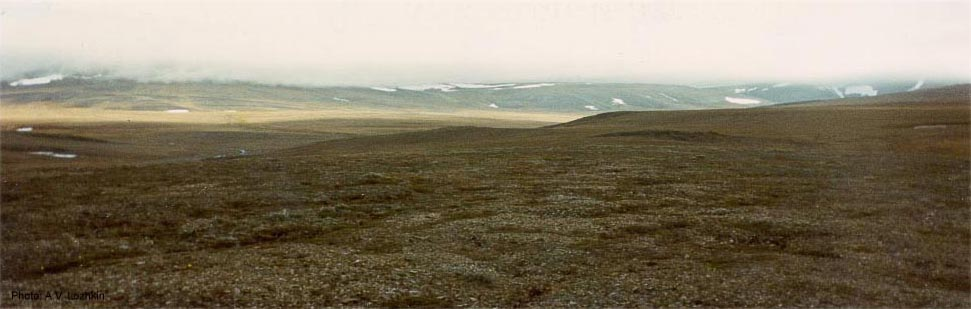 Tundra on remote Wrangel Island. The island in Russia's Chukchi Sea waters is protected by UNESCO. (NOAA)