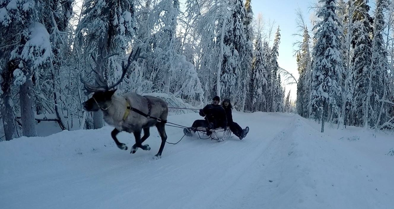 Yoshikawa and Alex Maslakov, a Ph.D. student at Moscow State University, take one of the reindeer on a trial sled ride in February 2017. (Kenji Yoshikawa)