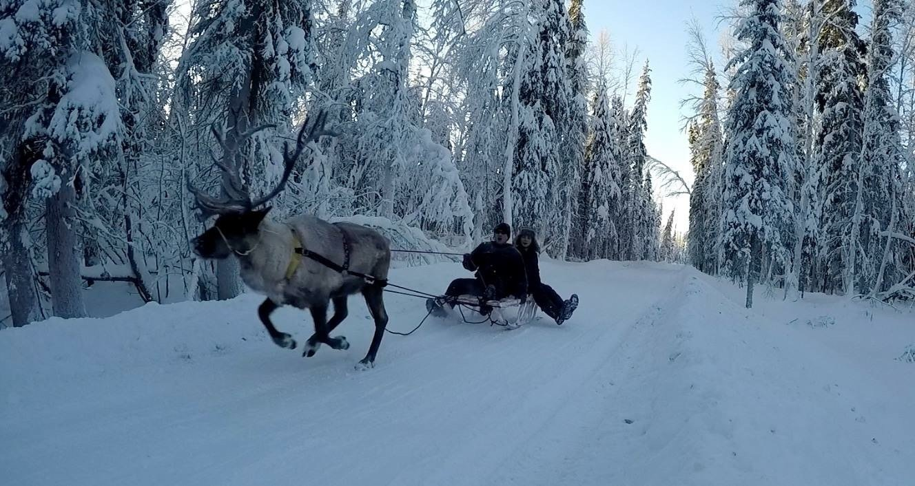 Scientist looks to be 'Japanese Santa,' mushing reindeer across tundra