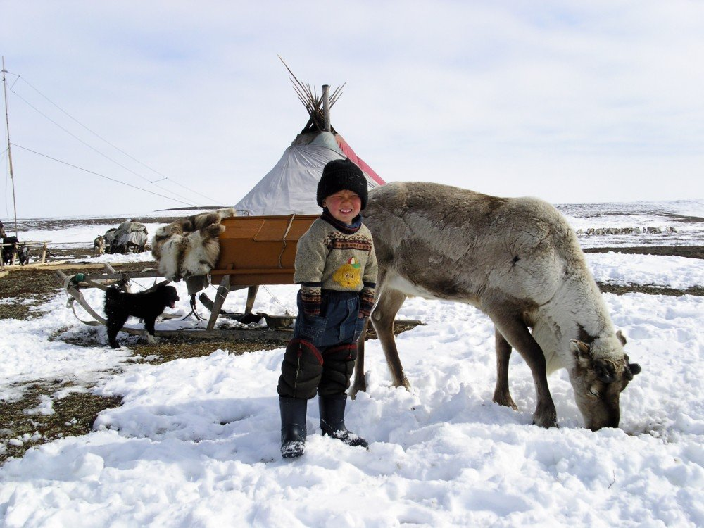 More than 800,000 reindeer vaccinated against anthrax