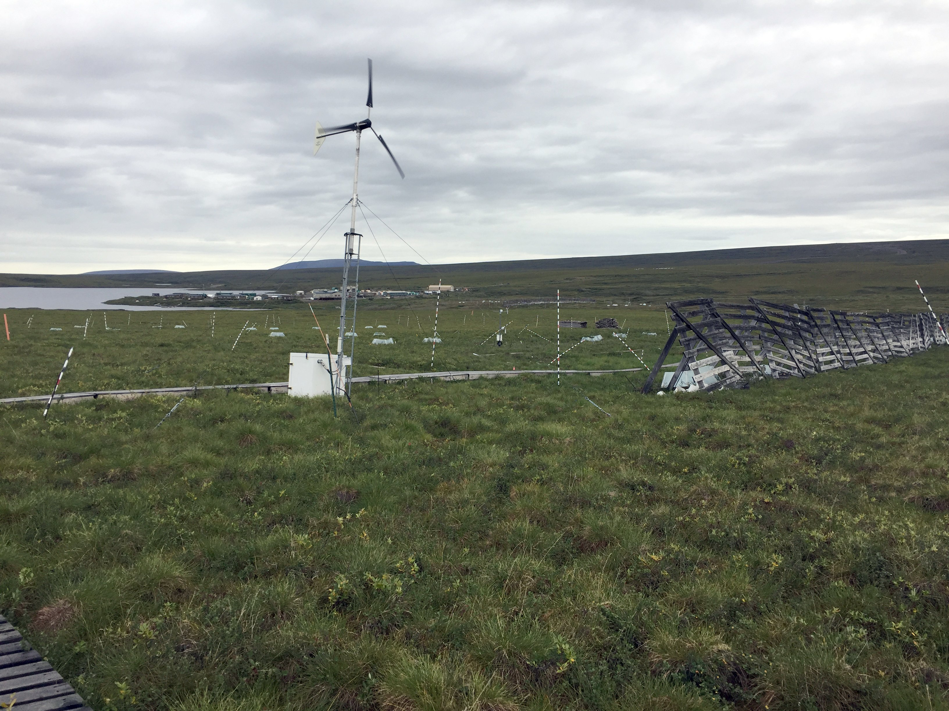 Snow fences and a wind turbine stand on the Arctic tundra at Toolik Field Station on August 3, 2017. (Kelsey Lindsey)