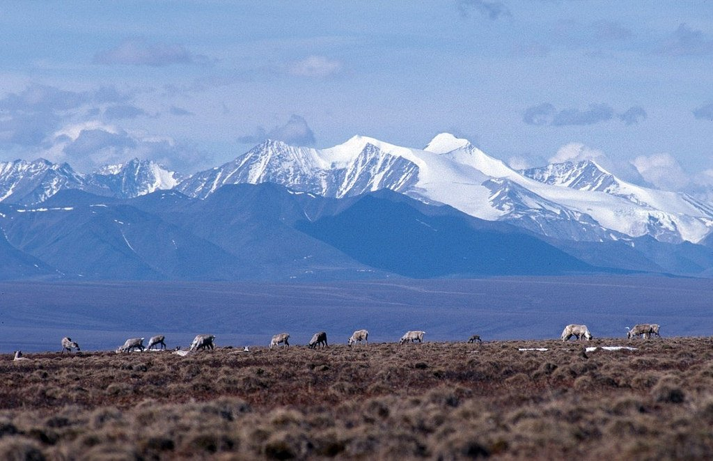 The coastal plain of the Arctic National Wildlife Refuge, with the Brooks Range as a backdrop. (U.S. Fish and Wildlife Service)