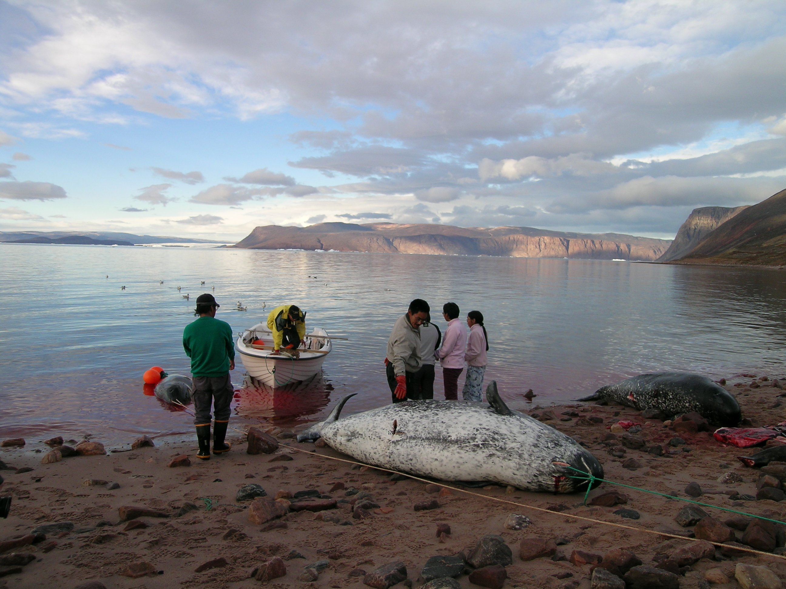 How debris from rockets launched far away is a risk to Inuit food security