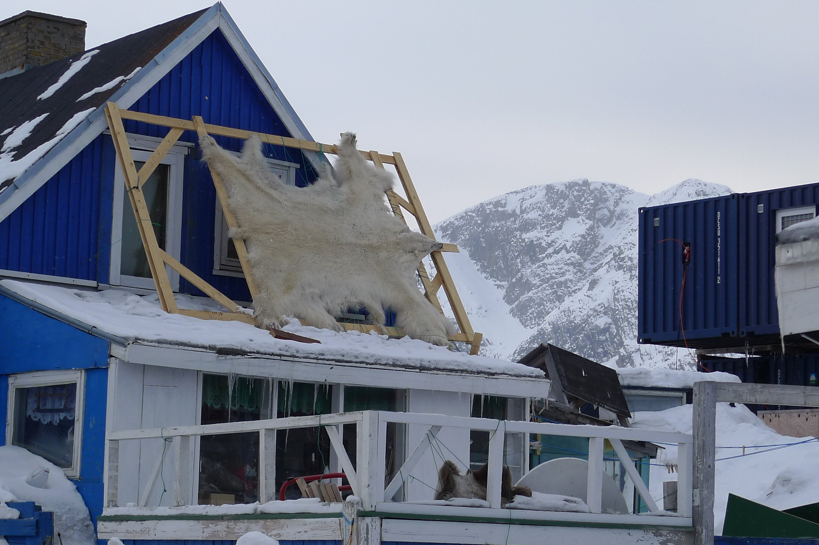 How traditional knowledge helps scientists studying polar bears in Greenland