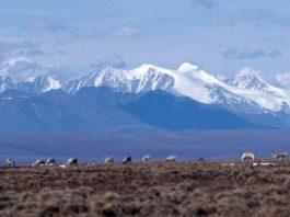 Oil development in Alaska's Arctic remains in limbo