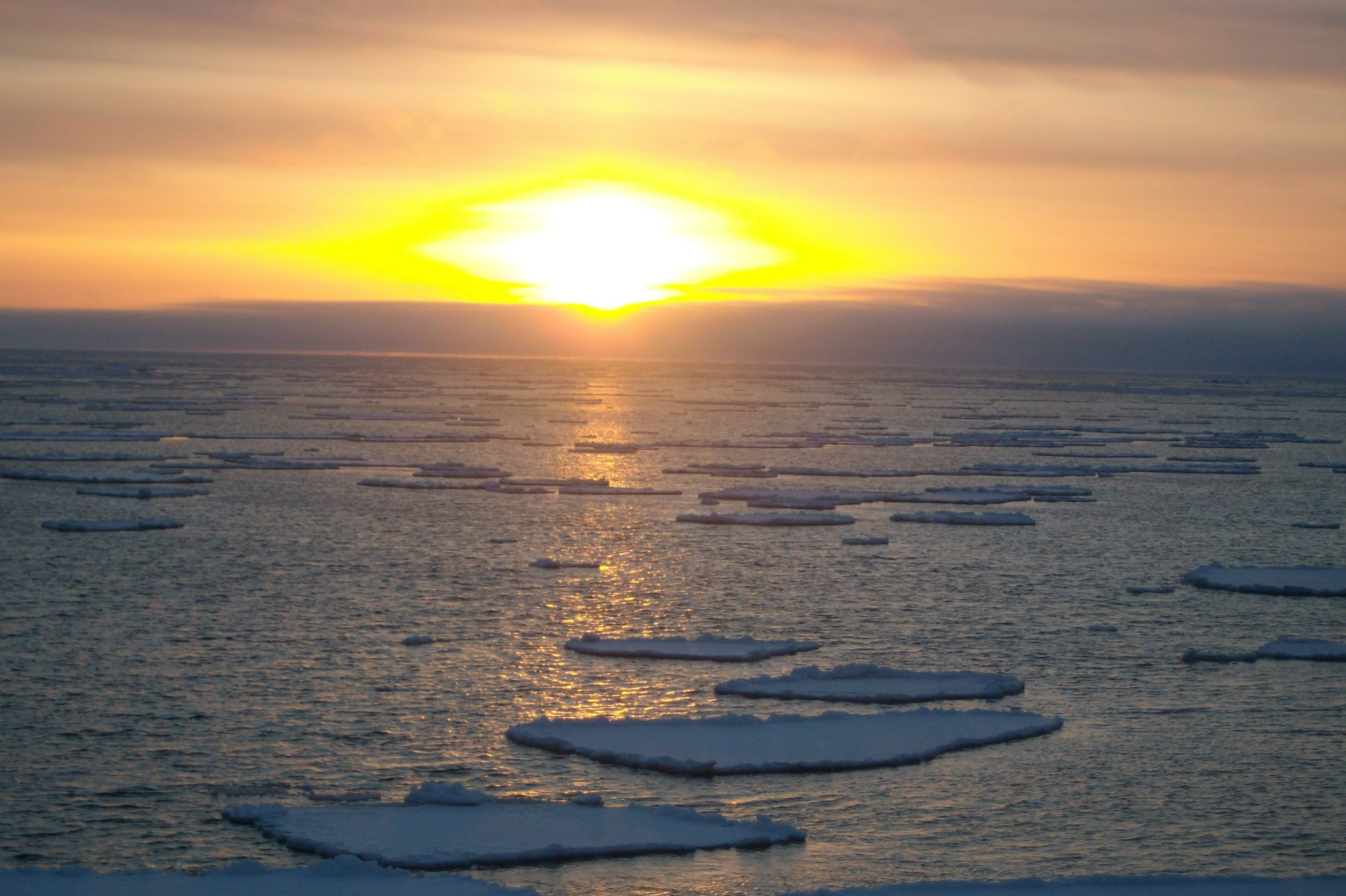 Warming temperatures and less ice are transforming the Bering Sea ecosystem, scientists say