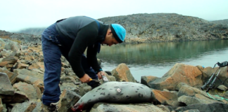 Hunting helps Greenlanders keep poverty at bay — but its benefits are spread unevenly