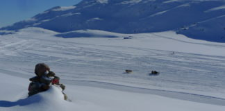Greenland mushers' group orders a canine quarantine to prevent spread of outside genes