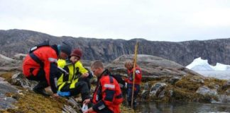 A warming Arctic means mussels are moving northward along Greenland's coast