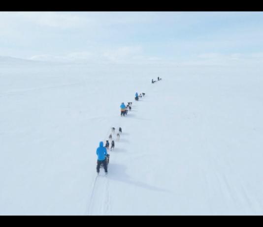 An Iditarod-inspired race lets a few choice amateur mushers take on Scandinavia's Arctic