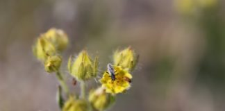 A changing climate is altering Arctic insect populations