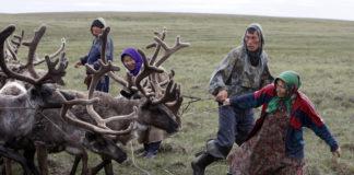 Yamal authorities move to reorganize reindeer husbandry