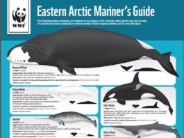 An illustrated guide aims to protect Arctic marine mammals from shipping