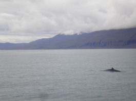Subsistence whalers celebrate, but doubts cloud the future of international whaling cooperation