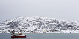 Sea ice loss is poised to dramatically change the Barents Sea ecosystem