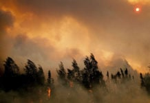 Years after fires in Alaska's boreal forests, the soils beneath showed dramatic warmth and carbon loss