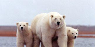 Trump administration plans construction to prepare Alaska's Arctic refuge for oil drilling