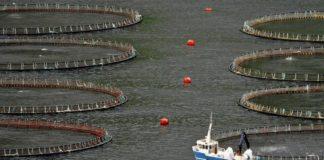 Faroe Islands seek fish export pledge with Russia trade deal