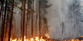 Wildfires are burning through Northern Europe, including in the Arctic