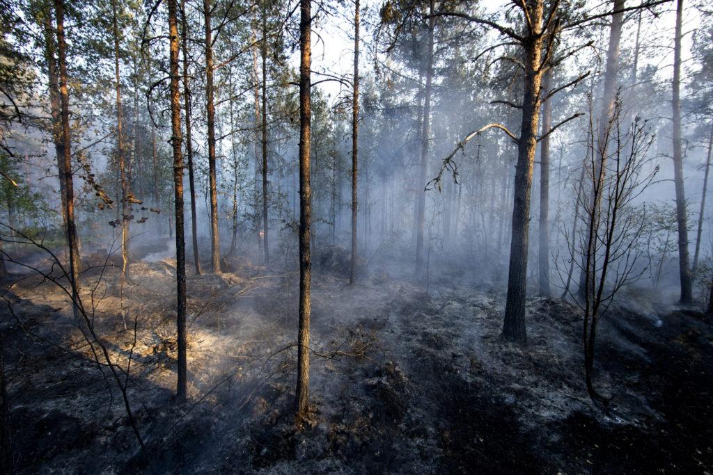 Metsäpalo Pyhäranta