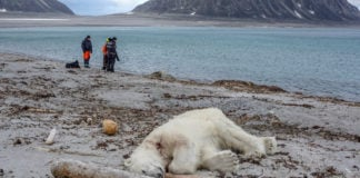 Polar bear shot dead after attack on Svalbard