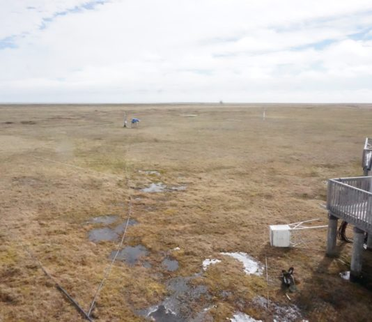 Tundra soils are releasing more carbon faster — and plant growth can't offset the trend