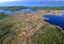 This microbe survey could tell us just how dangerous permafrost thaw is — and how to fight it