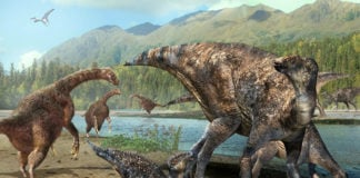 Newly discovered dinosaur footprints suggest the Arctic was a land bridge in Cretaceous times, too