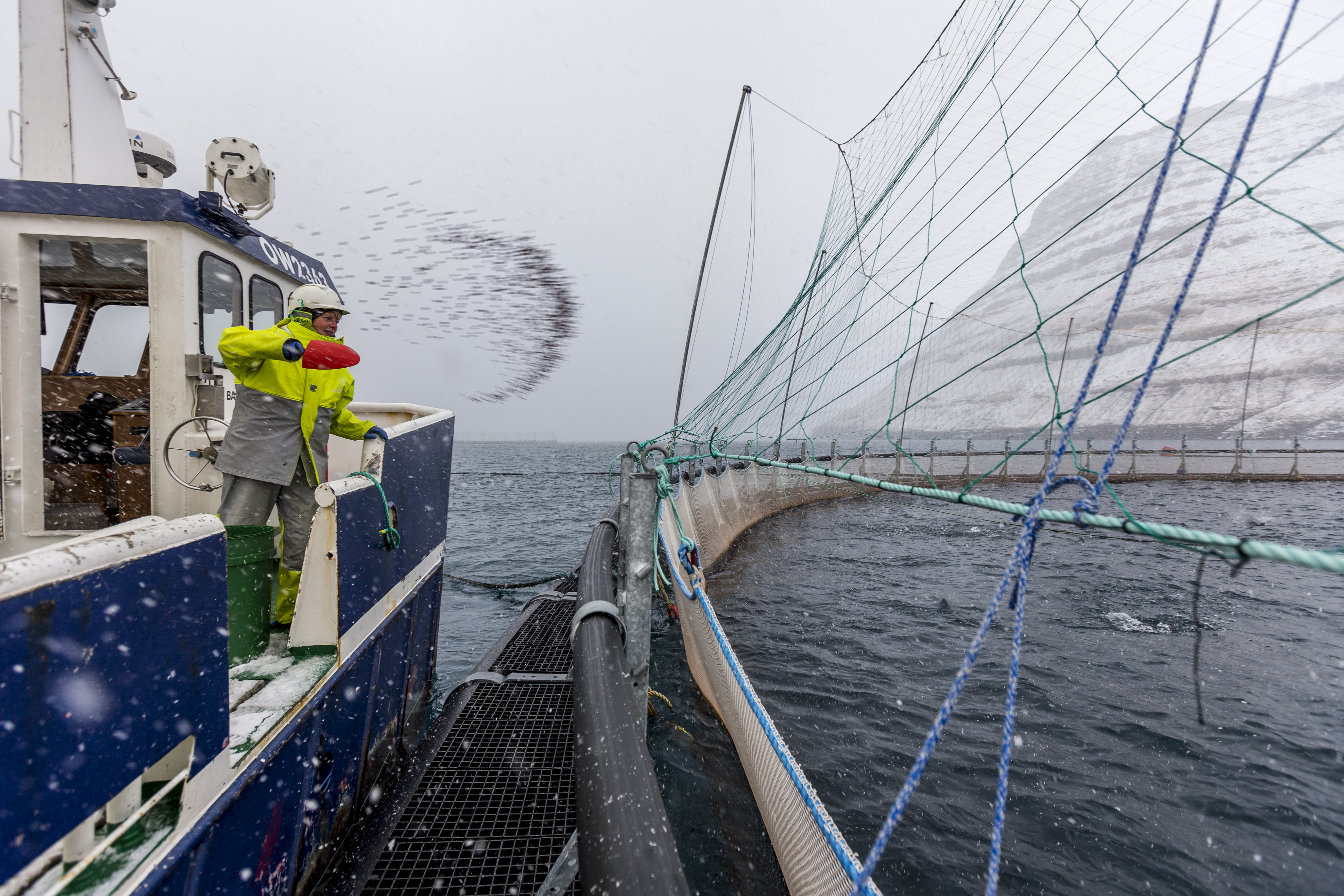 Protecting its booming fish exports, the Faroe Islands