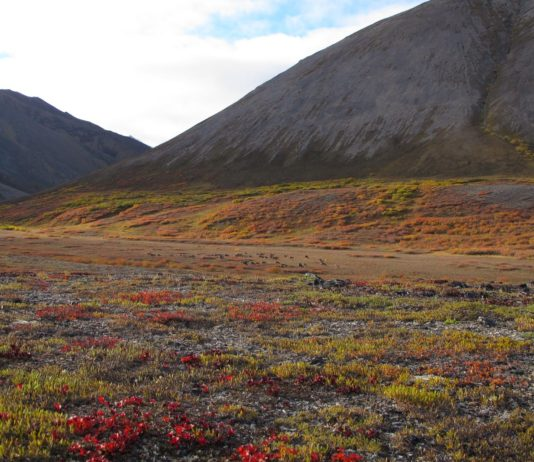 After delay, planning resumes on a controversial 200-mile road through Arctic Alaska