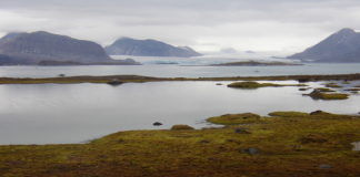 A Svalbard discovery shows 'superbugs' travel faster, further than previously thought, scientists warn